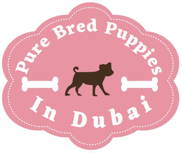 Purebred Puppies In Dubai